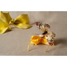 Farfalla con fiocco di tulle - 004
